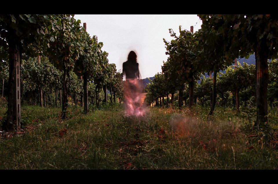 Il racconto della terra e del vino